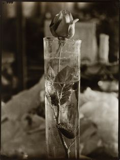 Josef Sudek: Rose In a Glass