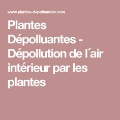 Plantes Dépolluantes - Dépollution de l´air intérieur par les plantes
