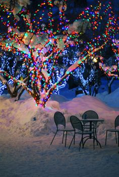 With the vibrantly colorful lights on the trees illuminating in the snow! Love!