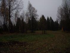 Árboles, bosque, cielo del color del cemento.