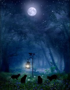The Witches Cats by ~ArwensGrace