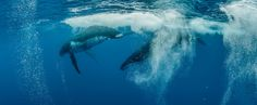 Whales Underwater – Intimate Encounters with Ocean Giants