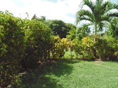 Garden and Grounds of Golden Grove Barbados