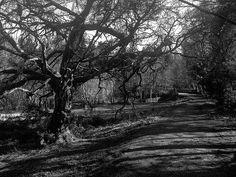 shady tree Shady Tree, My Photos, Country Roads, Image, Scouts