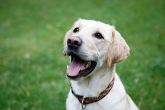 Mack works for the Maryland Department of Agriculture to sniff out American foulbrood in bee colonies. He underwent a 14-week training program to get certified as an American foulbrood detection dog.