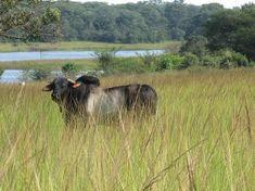 768Ha Farm For Sale in Mkushi Farming Block | Homenet Zambia