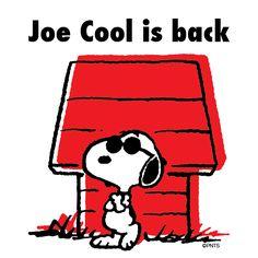 Joe Cool is Back!