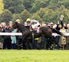 Trillion(1974)Hail To Reason- Margarethen By Tulyar. 4x4 To Sir Gallahad III, 4x4x4 To Nearco, 4x5 To Mumtaz Begum, 5x5 To Solario, 5x5x5x5 To Pharos, 5x5x5x5 To Plucky Liege. 32 Starts 9 Wins 14 Seconds 3 Thirds. $957,413. 1979 US Champion Grass Mare & Champion Older Mare In France. Dam Of Triptych. 4th Dam Of Treve(2013 & 2014 Arc Winner). Died In 1987.