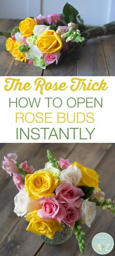 Great trick! How to open tight rose buds instantly.