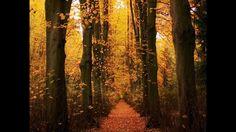 Outono, As Quatro Estações (Vivaldi)