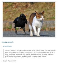 Looks like the crow is annoying the heck out of this cat with it's conspiracy theories.