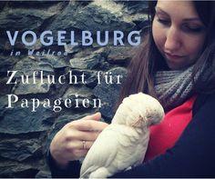 Papageien Sittiche Vogelburg Weilrod