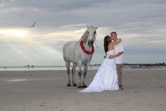 Horse with wedding couple @Trash Alou the dress session, sunset on Fort Myers beach FL  www.tinashepherdphotography.com