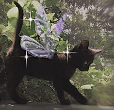 Pretty Cats, Cute Cats, Pretty Kitty, Photo Chat, Cat Aesthetic, Forest Fairy, Faeries, Aesthetic Pictures, Cute Pictures