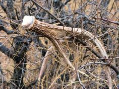 How/Where to Find Naturally Shed Antlers | Outdoor Life. I would love to find some...
