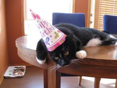 <b>Even if it isn't your birthday, you should party like it is.</b> Ranked in order of importance.