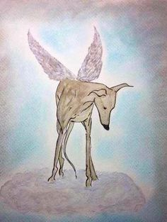 greyhound angel