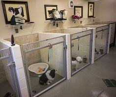 You want you could take your pet dog with you everywhere, but occasionally, you need a pet boarding facility (kennel) to be their house away from . Dog Grooming Shop, Dog Grooming Salons, Dog Grooming Business, Dog Boarding Kennels, Pet Boarding, Animal Boarding, Dog Boarding Near Me, Animal Room, Dog Kennel Designs