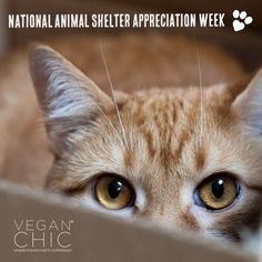It's National Animal Shelter Appreciation Week! (November 6-12, 2016) So many of our furry friends need a fur-ever home so remember: adopt, don't shop!