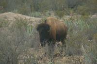 En Durango brilla una auténtica reserva ecológica