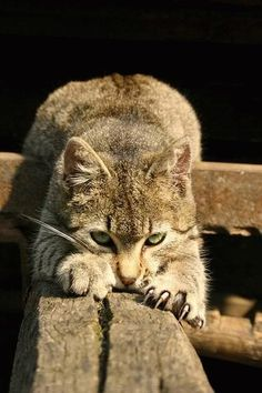 """""""If homeless cats could talk, they would probably say, give me shelter, food. companionship, and love, and I'll be yours forever."""" --Susan Easterly"""
