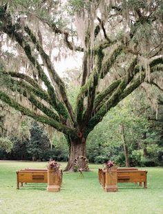 55 Ideas Oak Tree Wedding Ceremony Spanish Moss For 2019 Outdoor Ceremony, Wedding Ceremony, Our Wedding, Wedding Venues, Dream Wedding, Wedding Shot, Outdoor Weddings, Church Wedding, Outdoor Seating