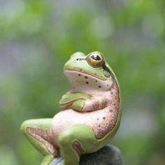 思索中。 frog