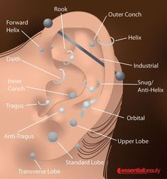 Essential Beauty we pierce all parts of the ear and body!At Essential Beauty we pierce all parts of the ear and body! Ear Piercings Chart, Piercing Chart, Types Of Ear Piercings, Cute Ear Piercings, Body Piercings, Piercing Tattoo, Lip Piercing, Ear Parts, Accesorios Casual