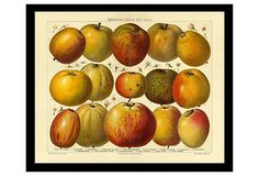 Apfelsorten (Apple Varieties) on OneKingsLane.com $75.
