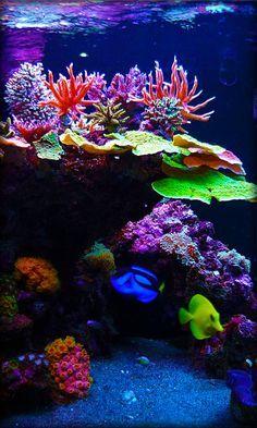 They can always improve the sight of an aquarium. Saltwater Aquarium Setup, Coral Reef Aquarium, Live Aquarium, Saltwater Tank, Marine Aquarium, Nano Reef Tank, Reef Tanks, Fish Tanks, Aquarium Live Wallpaper
