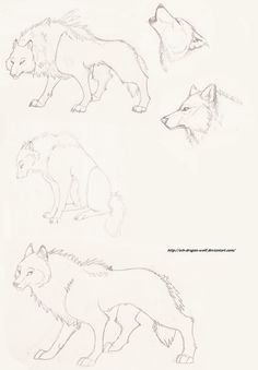 Wolf Sketch by ~Ash-Dragon-wolf on deviantART