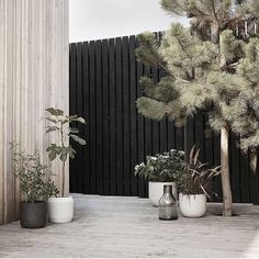 Minimalist garden with large potted plants and black fences. Minimalist garden with large potted plants and black fences. Minimalist Garden, Minimalist Design, Black Fence, White Fence, Green Street, Backyard Fences, Black Garden Fence, Garden Care, Terrace Garden