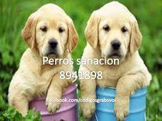 perros+cura2.jpg (960×720)