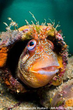 flag of Ocean Simply breathtaking - sea life Underwater Creatures, Underwater Life, Ocean Creatures, Colorful Fish, Tropical Fish, Poisson Mandarin, Vida Animal, Life Under The Sea, Beneath The Sea