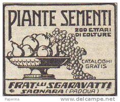 F.LLI SGARAVATTI SAONARA (PADOVA) PIANTE E SEMENTI 1925 PUB.RIT. DA GIORNALE