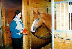 Clicker training for horses - how to start