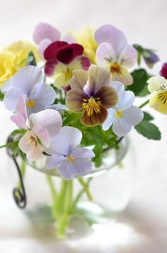Violas, love these!!