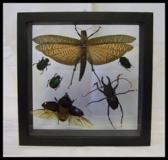 Unique Six Specie Bug Insect Frame Wall by timelessdesigns07