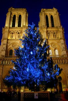 Christmas tree fronting the Notre Dame, Paris, France. We had the opportunity to see the workers on giant cranes decorating the tree.  It is truly beautiful.