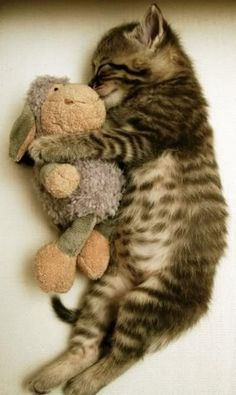 Aw man I hate cats but this is damn cute!