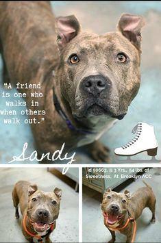 Sandy In Iso Needs Help Nyc Dogs Dog Adoption Animal Welfare Quote