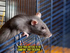 Welcome to iGotRats Rat Care, Rat Hammock, Baby Animals, Cute Animals, Cute Rats, Fun Crafts, Your Pet, Pets, Mice