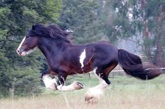 """""""Free to run"""" by Brian Edworthy   RedBubble"""