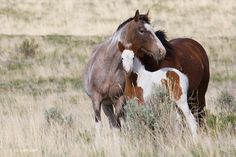 The Enchanted Cove - scarlettjane22:     Wild Horses, Steens    ...