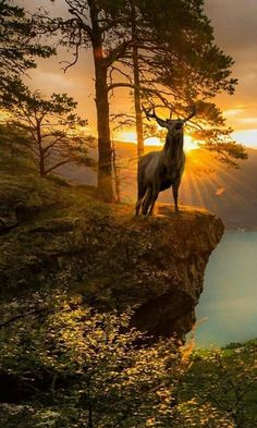 Deer backdropped by sunrises Nature Pictures, Animal Pictures, Beautiful Pictures, Wildlife Paintings, Wildlife Art, Nature Animals, Animals And Pets, Wildlife Photography, Animal Photography