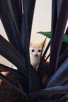 #Cats #Cat #Kittens #Kitten #Kitty #Pets #Pet #Meow #Moe #CuteCats #CuteCat #CuteKittens #CuteKitten #MeowMoe He's always beating around the bush ... http://www.meowmoe.com/60751/