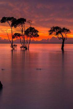 Sunrise Over the Mangroves, Queensland, Australia - T Travel Photography (via 500px)