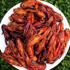 Alla recept i kategorin Kräftskiva | SVT recept Chicken Wings, Shrimp, Meat, Food, Essen, Meals, Yemek, Eten, Buffalo Wings