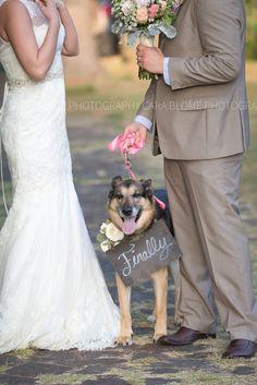 www.carablomephotography.com dog, german shepherd, wedding, dog in wedding, ringbearer, colorado wedding, best friend, bride's best friend, colorado photographer, wedding photography, wedding planning