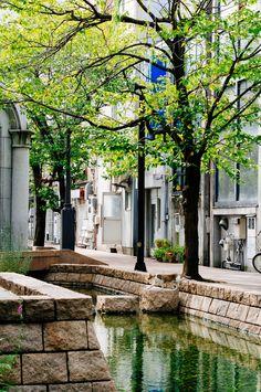 The cat walks, Kochi Prefecture - The cat walks, Kochi Prefecture w/ VSCO Film Fuji Fortia SP